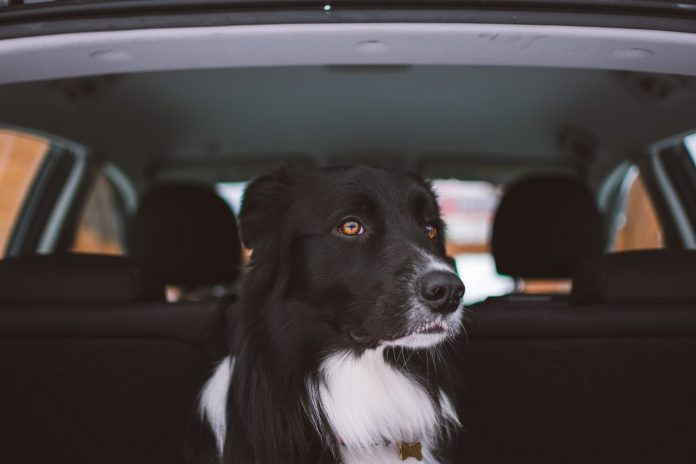 advice to keep dogs safe on car rides for staycations