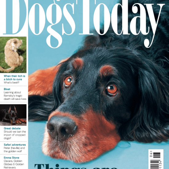 June 2021 Dogs Today issue