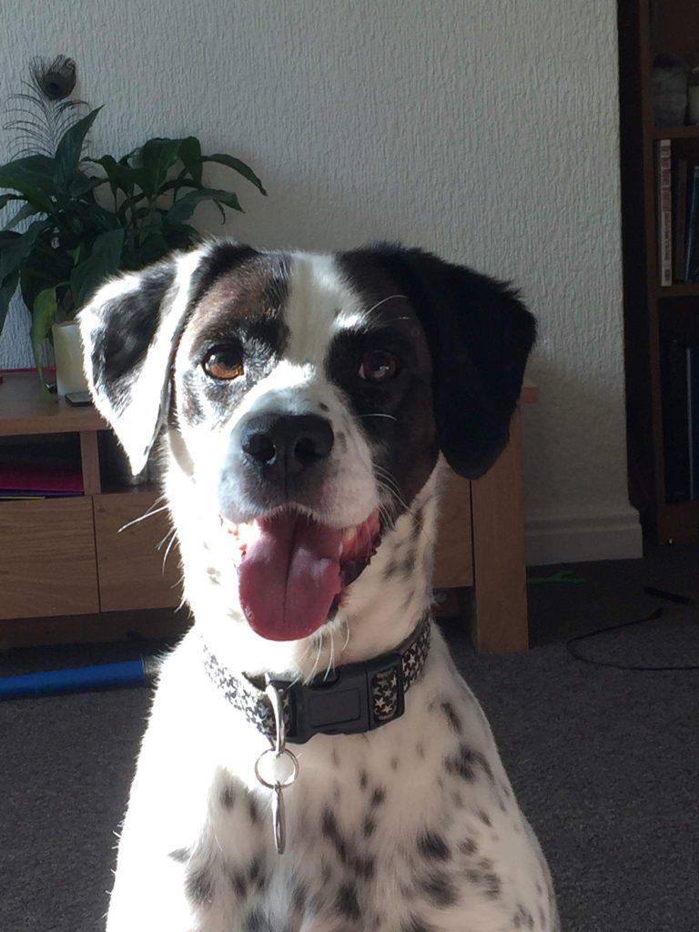 Rescue dog Barney