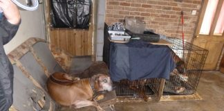 dogs kept in breach of ban