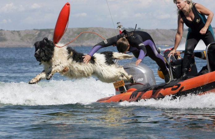 water rescue dog Whizz