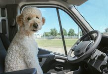 staycations and no support are putting pet boarding businesses on their knees