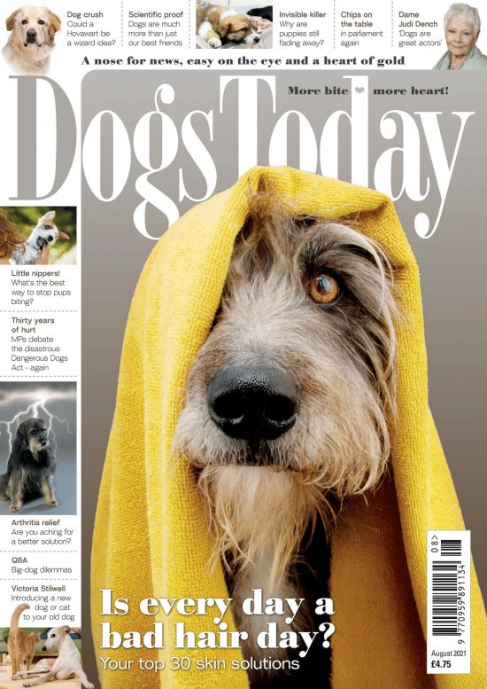 August 2021 dogs today magazine