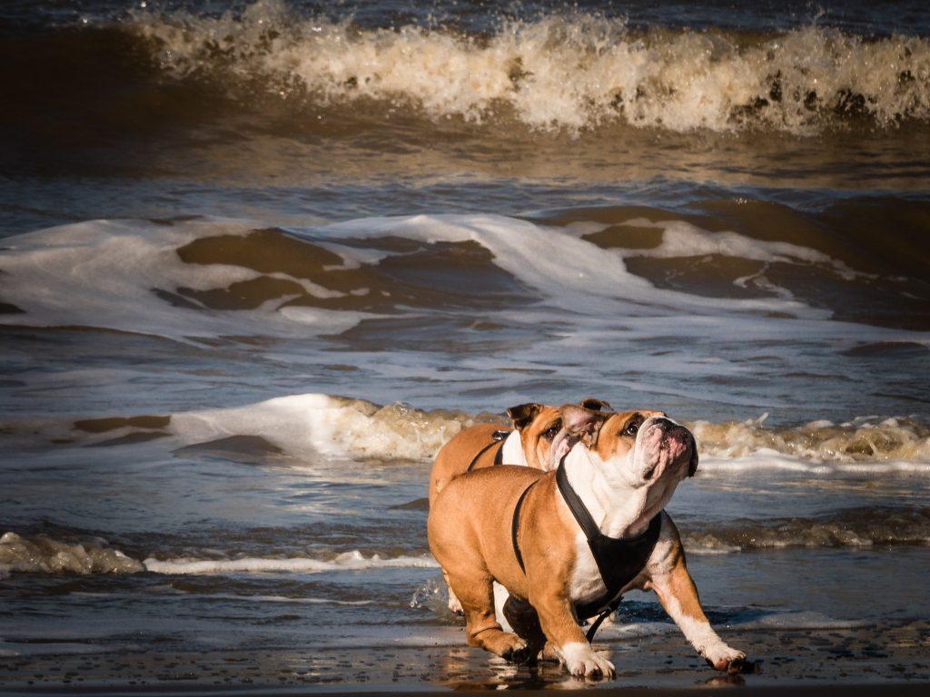 bullies at beach