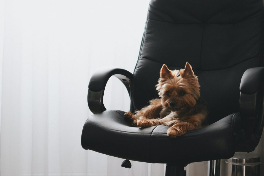 dog at work place