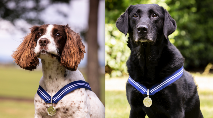 RAF dogs with their medals, the animal OBE