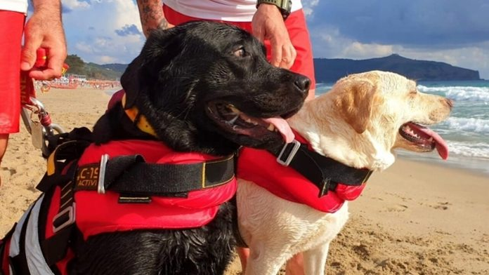 water rescue dogs in Italy