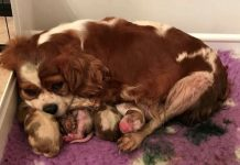 puppy farm victims