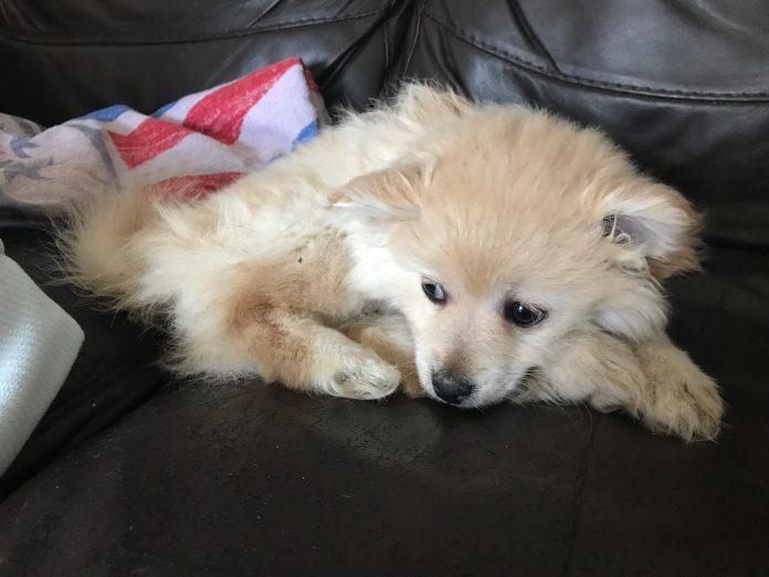 puppy Spencer