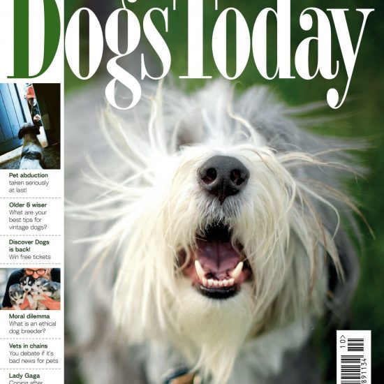 Dog Today October 2021 Issue